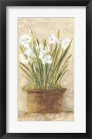Framed Garden White Narcissus Panel