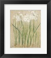 Framed Narcissus Cool