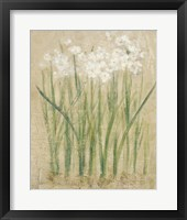 Framed Narcissus Cool