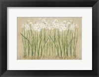 Framed Narcissus Row Cool