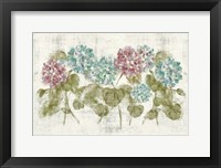 Framed Vibrant Row of Hydrangea No Border