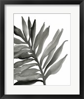 Tropical Palm III BW Framed Print