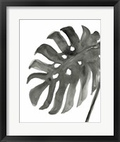 Tropical Palm IV BW Framed Print