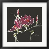 Framed Magnolia on Black III