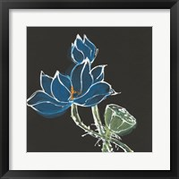 Framed Lotus on Black VII