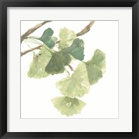 Framed Gingko Leaves I on White
