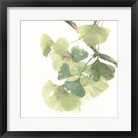 Framed Gingko Leaves II on White