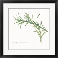 Framed Variegated Rosemary II