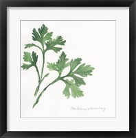 Framed Italian Parsley II