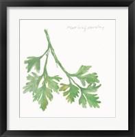 Framed Flat Leaf Parsley