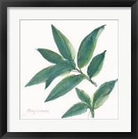 Framed Bay Leaf