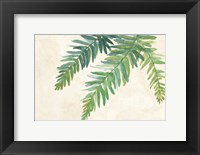 Framed Ferns Square I on Cream