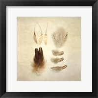 Framed Feathers II Square