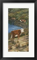 Framed Cattle by the River