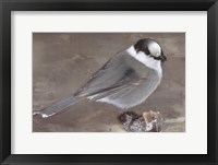 Framed Grey Jay II