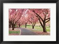 Framed Cherry Parade
