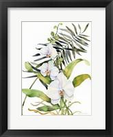 Framed Botanical Phalaenopsis