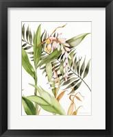 Framed Botanical Shell Ginger