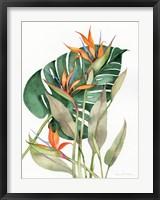 Framed Botanical Birds of Paradise