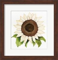 Framed Autumn Elegance White Sunflower