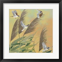 Framed Sparrows and Phragmates Sq