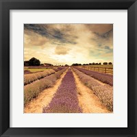 Framed Lavender Fields Forever