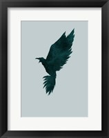 Framed Crow