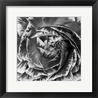 Framed Ranunculus Abstract IV BW
