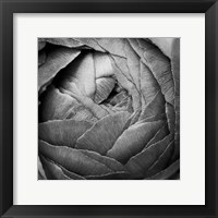 Framed Ranunculus Abstract III BW