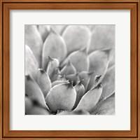 Framed Garden Succulent I