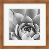 Framed Garden Succulent III