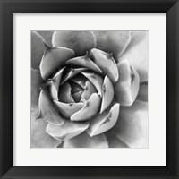 Framed Garden Succulent II