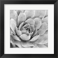 Framed Garden Succulent IV