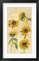 Framed Sunflowers on Script
