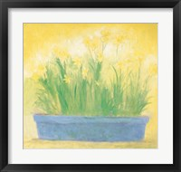 Framed Window Box with Narcissi