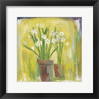 Framed Narcissi