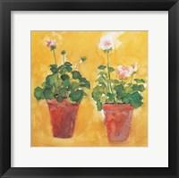 Framed Pelargoniums