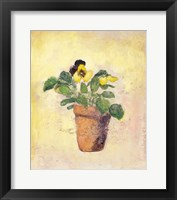 Framed Pansy Giant Fancy