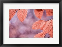 Framed Sepia Leaves