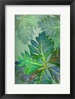 Framed Tropical Leaves III