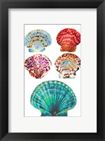 Framed Seashell Collection I