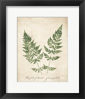 Framed Vintage Ferns VII no Border