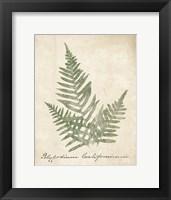 Framed Vintage Ferns XI no Border