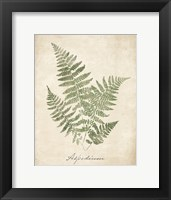 Framed Vintage Ferns IX no Border