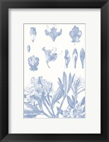 Framed Serenity Rhododendron on White