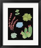 Framed Succulent Chart IV