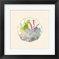 Framed Succulent Terrarium III
