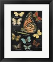 Framed Botanical Butterflies Postcard II Black