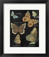 Framed Botanical Butterflies Postcard III Black