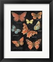 Framed Botanical Butterflies Postcard IV Black